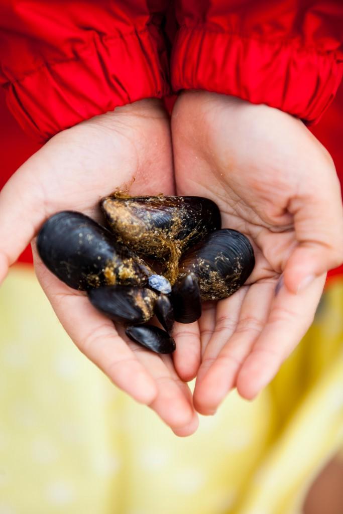 Mussels, Perth