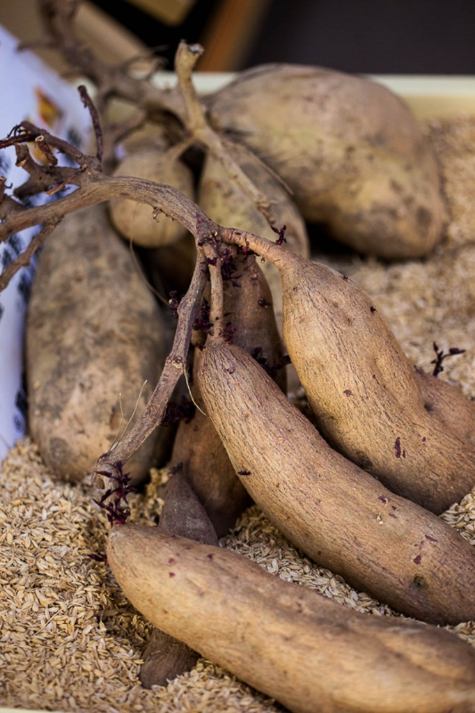 Sweet potatoes from Kagoshima
