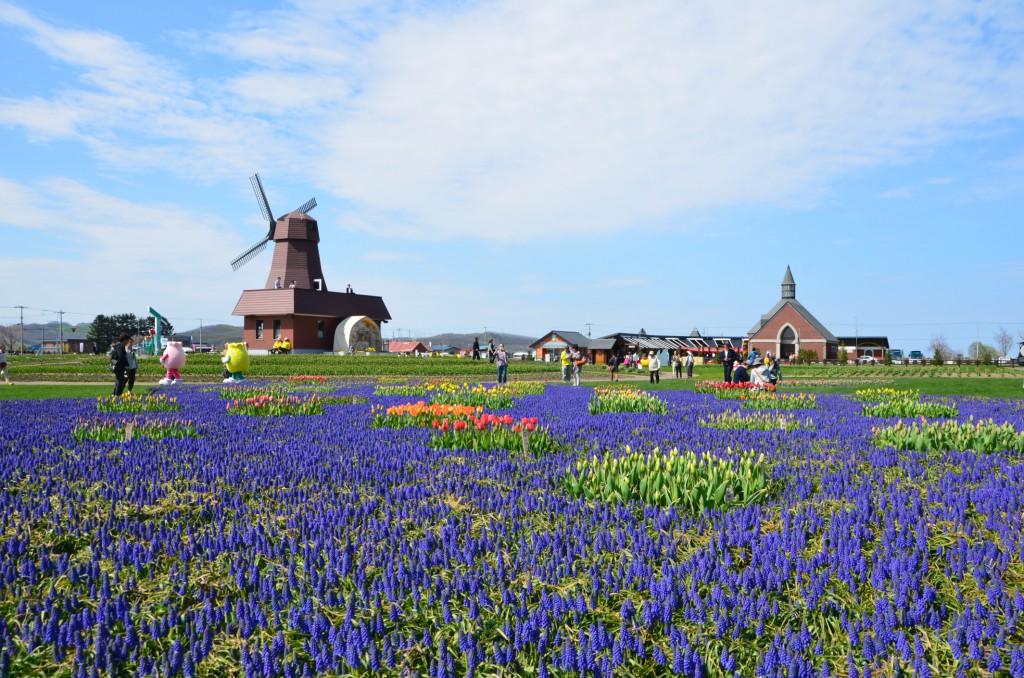 Soak in the rustic splendour of the lavender fields in Hokkaido.