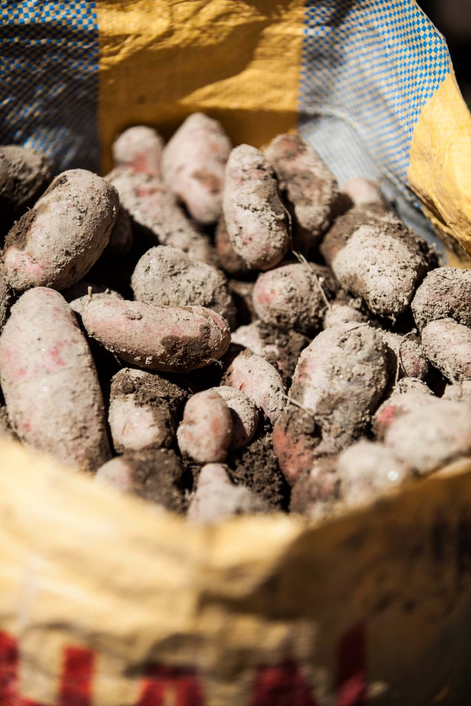 Hello, potatoes. Still caked with soil, these are precious crops the result of much hard work.