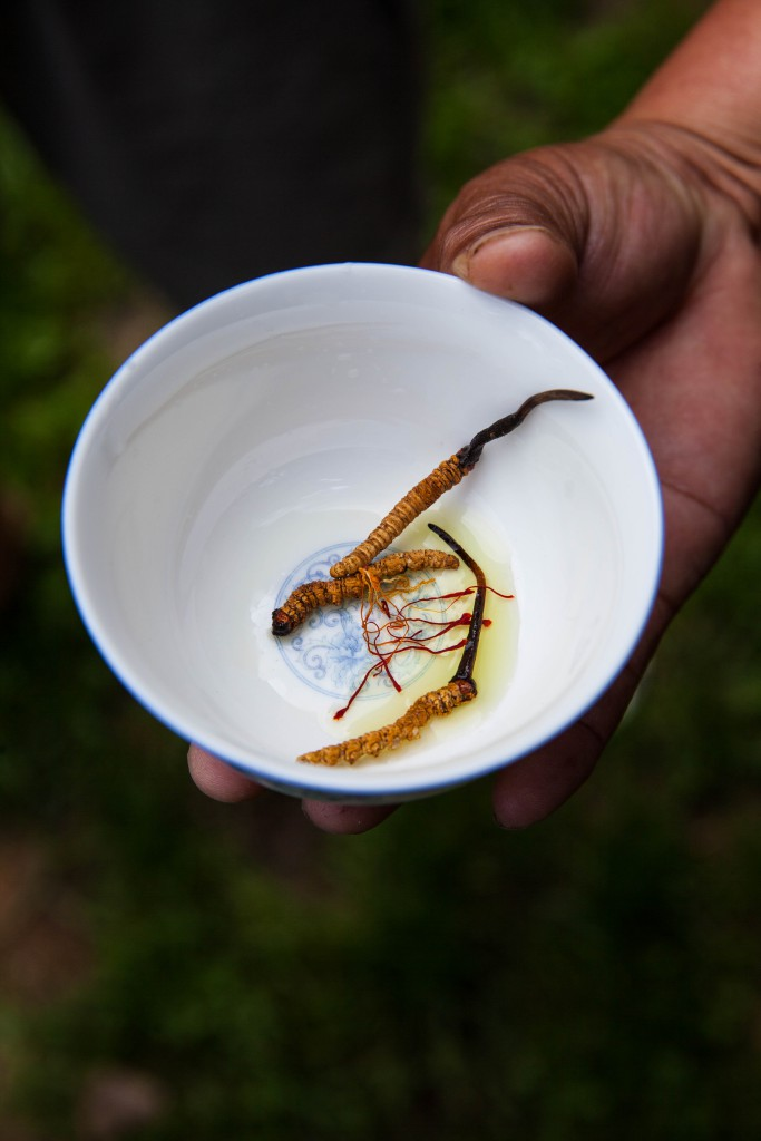 Cordyceps were added to this batch of ara, together with strands of saffron.