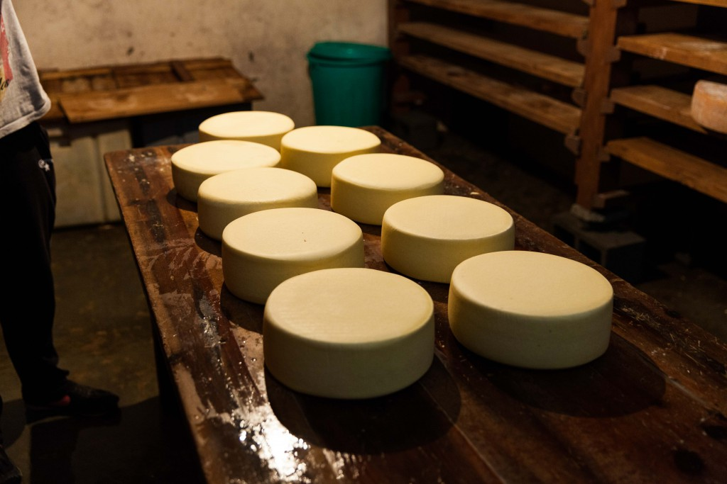 Gouda cheese maturing in the factory.