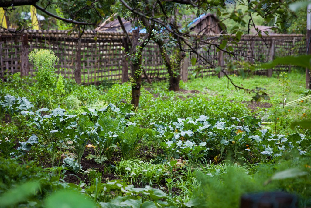 A backyard garden of greens. The heady scent of herbs - that's a scent of green.
