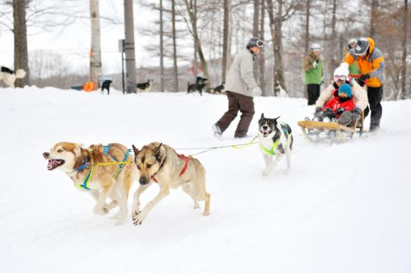 The dogs love the snow as much as we do, and you'll love dashing down the snow with them!