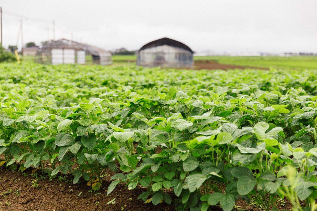 Taste Japan Farm to Table